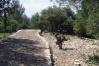 2009 - allée cavalière